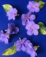 sharkey-instagram-purple-flowers.jpg