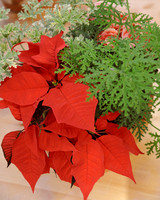 6055_113010_poinsetta_centerpiece.jpg