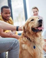 group petting dog