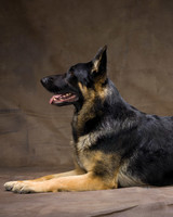 md105724_1110_germansheperd_00031.jpg