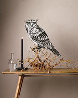 owl-on-branch-003-flame3-md110411.jpg