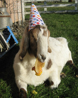 party_animals_photo_contest_84431.jpg