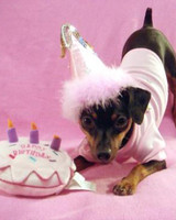 party_animals_photo_contest_86479.jpg