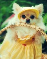 pets_easter2011_13200572_26478336.jpg