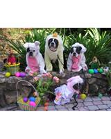 pets_easter2011_13225546_31063572.jpg