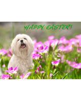 pets_easter2011_13384582_11346187.jpg