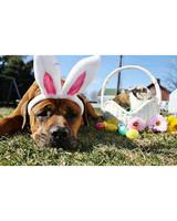pets_easter2011_13433004_31462818.jpg