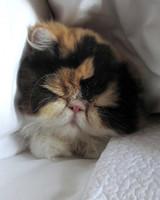 pets_martha_kitten_princess_peony.jpg