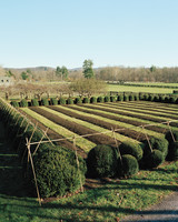 winterizing-the-garden-1-ma105573.jpg