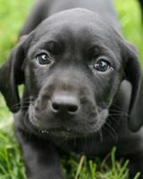pets-0711-14273641-122717-32995659.jpg