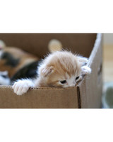 pets_kittens_0610_9489267_23509186.jpg