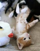 pets_kittens_0610_9489417_23509186.jpg