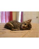 pets_kittens_0610_9500575_14150361.jpg
