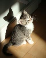pets_kittens_0610_9523851_23575282.jpg