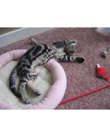 pets_kittens_0610_9549835_23631295.jpg