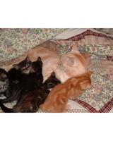 pets_kittens_0610_9563987_12063671.jpg