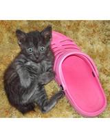 pets_kittens_0610_9610395_11292131.jpg