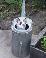 pets_kittens_0610_9629975_11972709.jpg