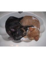 pets_kittens_0610_9663989_23835202.jpg