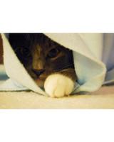 pets_kittens_0610_9669464_23844786.jpg