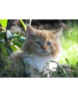 pets_kittens_0610_9678254_23858034.jpg