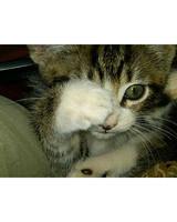 pets_kittens_0710_9483861_13377807.jpg