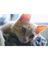 pets_kittens_0710_9484092_11162285.jpg