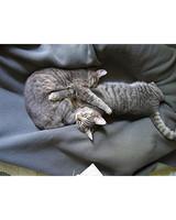 pets_kittens_0710_9484673_23500315.jpg