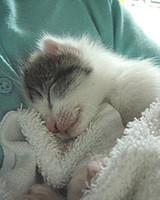 pets_kittens_0710_9486599_23504117.jpg