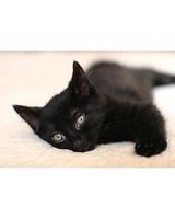 pets_kittens_0710_9550913_12506384.jpg