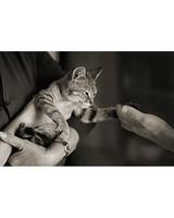 pets_kittens_0710_9722842_11355007.jpg