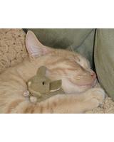 pets_kittens_0710_9732382_19295698.jpg