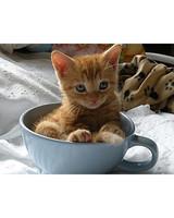 pets_kittens_0710_9780406_11976447.jpg