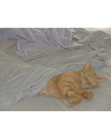 pets_kittens_0710_9781179_24090399.jpg