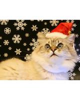 pets_santa09_6721190_18309412_main.jpg