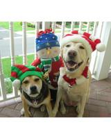 pets_santa09_6726548_18320312_main.jpg