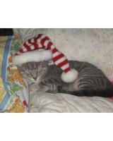 pets_santa09_6769788_18410113_main.jpg