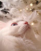 pets_santa09_6826920_18524513_main.jpg