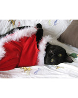 pets_santa09_6852910_11808277_main.jpg