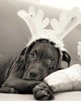 pets_santa09_6873917_18633468_main.jpg