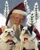 pets_santa09_6877119_11367823_main.jpg