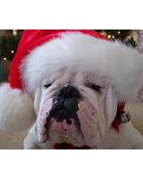 pets_santa09_6881007_18647945_main.jpg