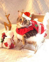pets_santa09_6904482_13040969_main.jpg