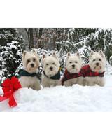pets_santa09_6963545_18772947_main.jpg