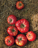 four-seasons-farm-tomatoes-md107849.jpg