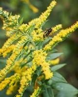margaret roach bird garden