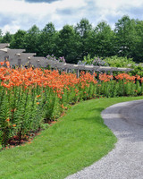 tiger lilies lining pathway