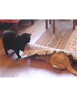 pets-at-play-0311-12922882_30513637.jpg