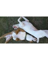 pets-at-play-0311-12971105_30640491.jpg