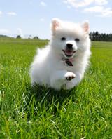 pets-at-play-0311-12993114_30670988.jpg